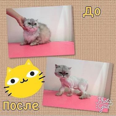 Груминг кошек и собак в Московском зоосалоне Балути! Акция.