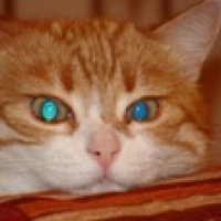 Мурка: кошка, которая подарит Вам счастье!